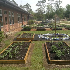 4-H School Garden at Freeport Elementary