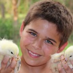 Noah, a Holmes County 4-H member, is learning responsibility through the 4-H Chick Chain project.