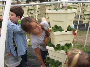 Youth enjoying the Calhoun County 4-H Learning Gardens which Mr. Wyrick helps to maintain.
