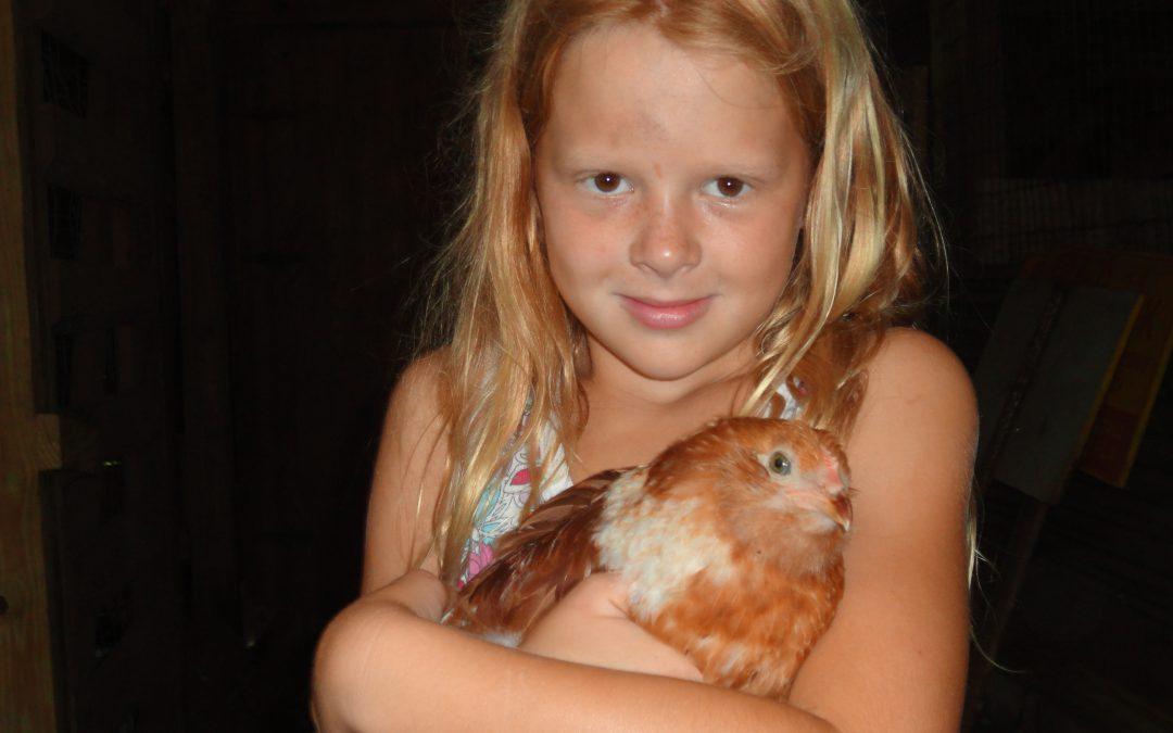 4-H Chick Chain Project Coming to a Close