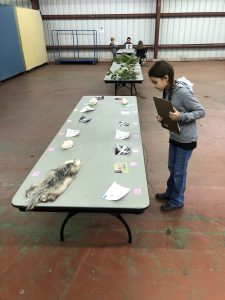 Youth is looking at wildlife species on table.