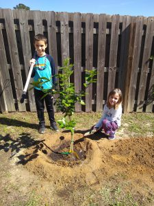 2 kids planting a tree