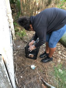 4-H member setting up trap for feral cat in community