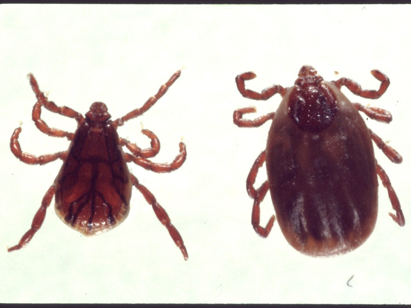 Don't Let A Tick Ruin Your Summer!