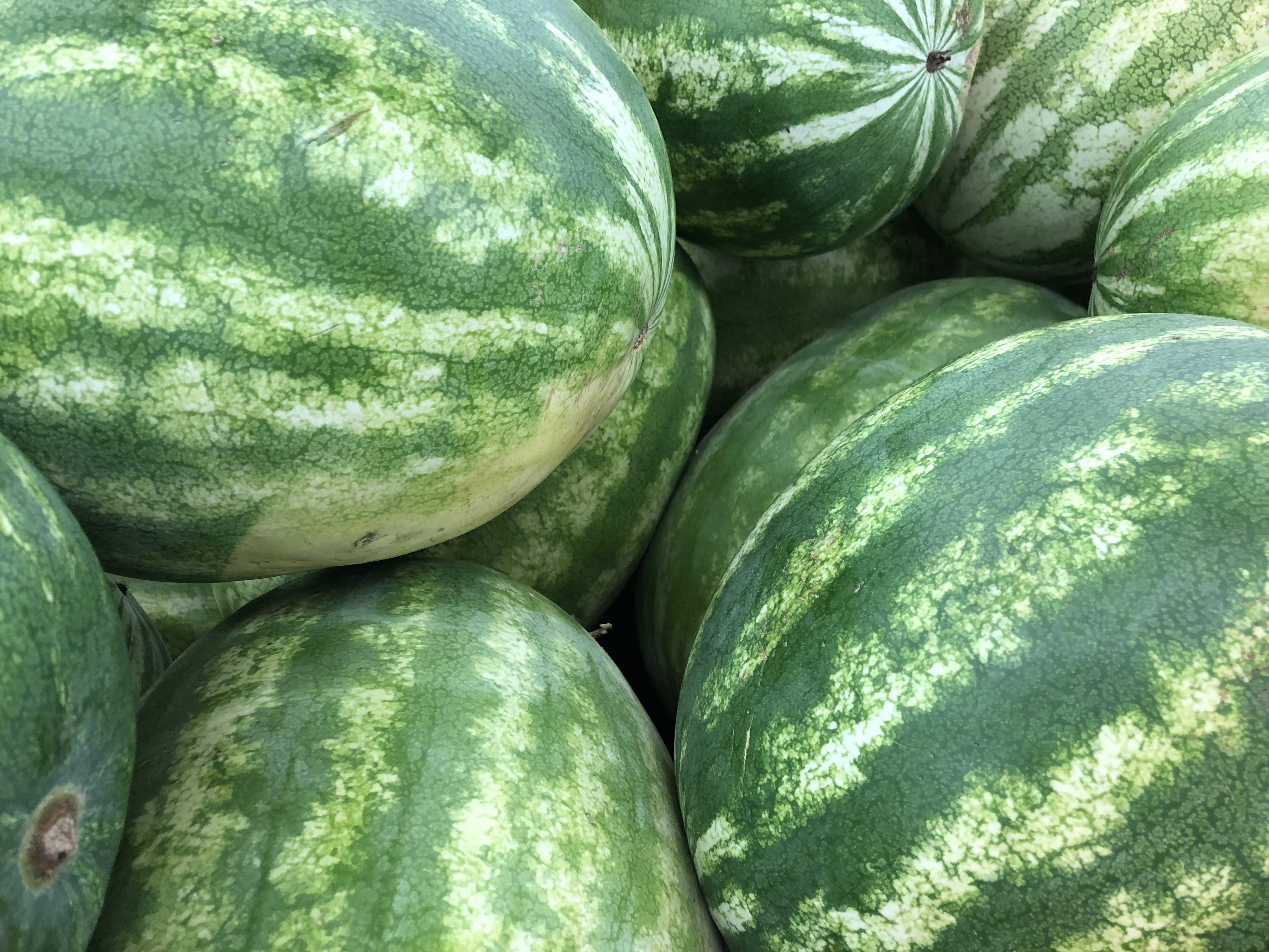 In Season Watermelon Living Well In The Panhandle