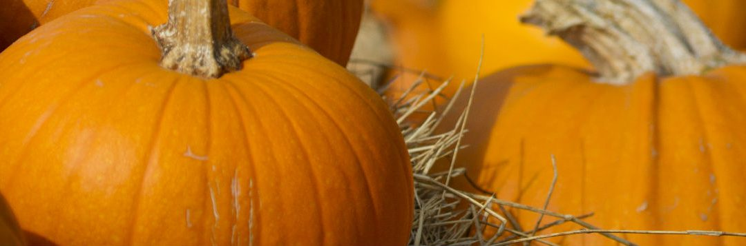 Pumpkins are the Stars of Autumn