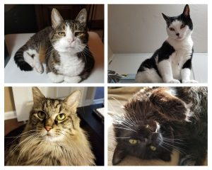 pictures of four cats