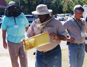 Attendees learn about bee hive maintenance.