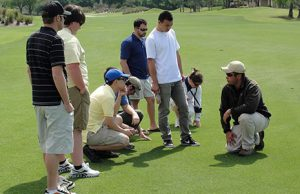 People looking at turfgrass