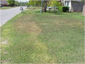 Lawn cold injury from too early fertilizer application