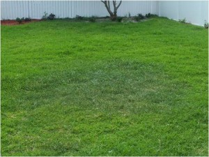 Dry Area in Lawn