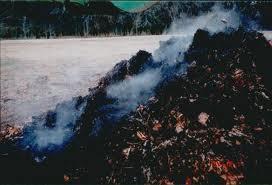 Compost Steam