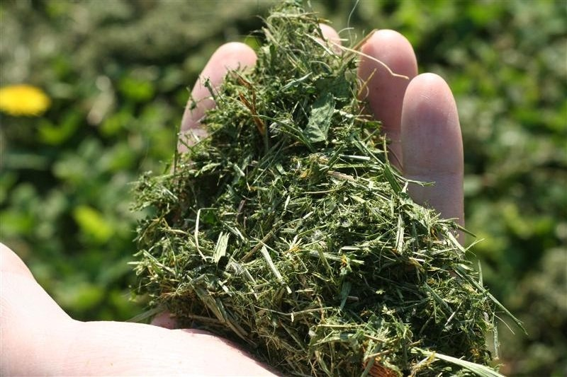 Disposing Of Grass Clippings Can Be A Pain But Alternatives Exist ……