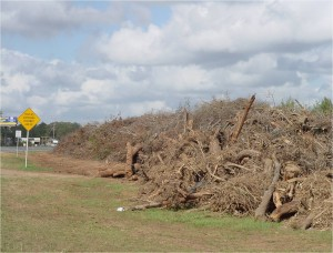 After a hurricane, piles of vegetative debris are common sights. Photo credit: Carrie Stevenson