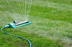 Video Feature: Learning When to Water Can Lead to a Healthier Lawn