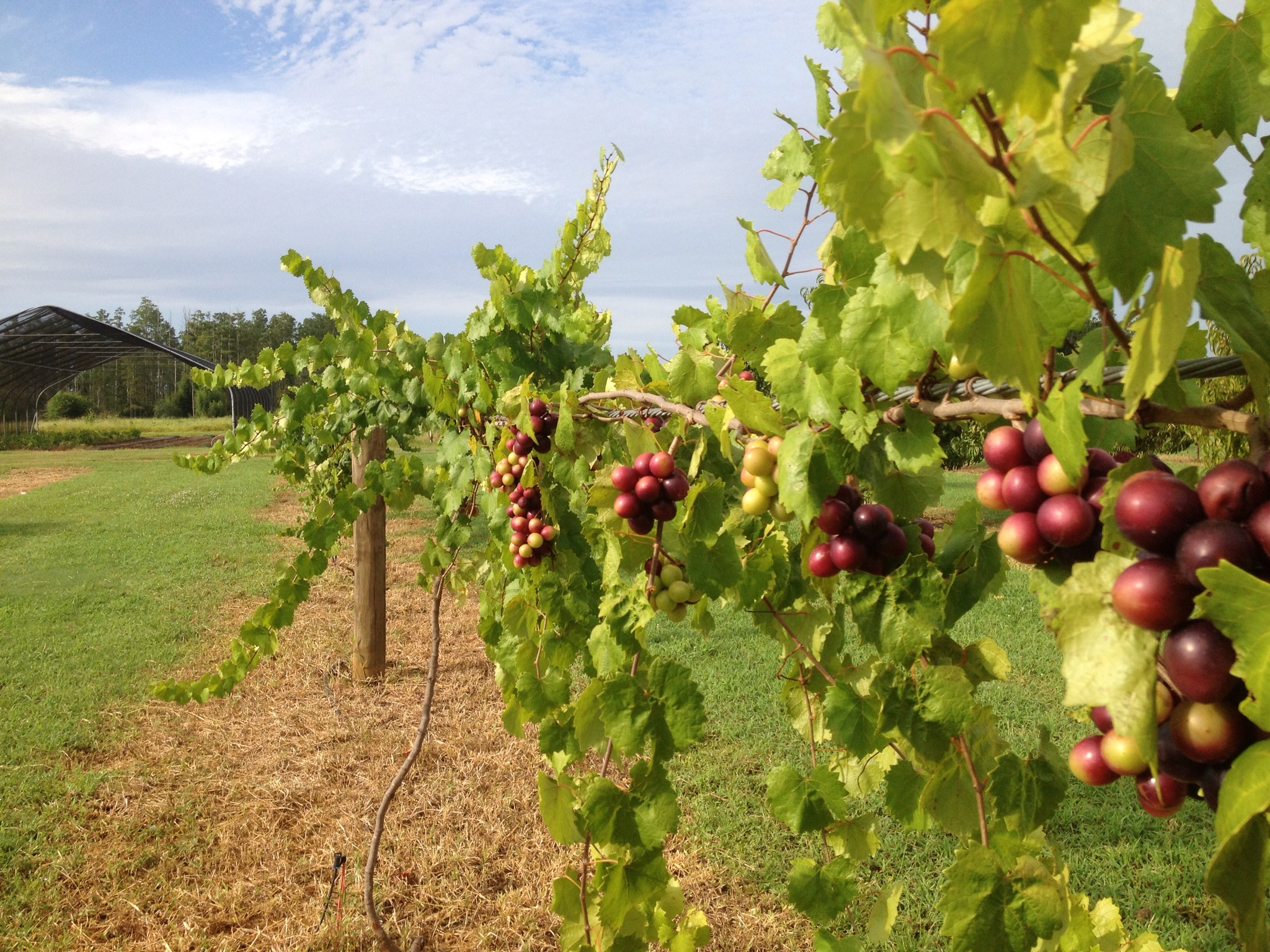 Fruit Tree Options For The Florida Panhandle