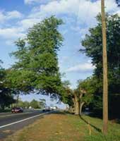 tree30