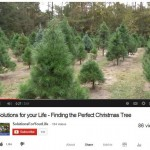 Video – Finding the Perfect Christmas Tree