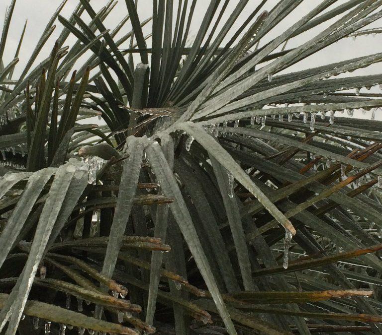 Did the Freeze Kill My Palms?