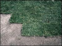 Sodding Lawn Photo Credit: UF/IFAS