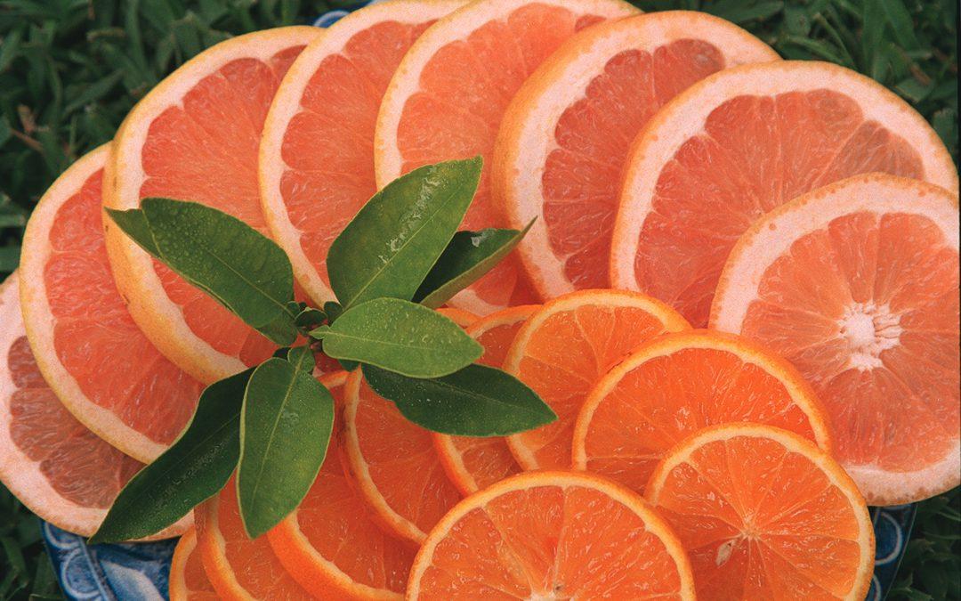Citrus Spotlight: 'Parson Brown', A Unique Sweet Orange
