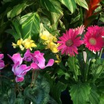 Success with Houseplants: Watering Correctly