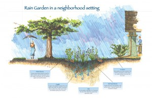 This diagram shows how a rain garden works in a home landscape.  Photo courtesy NRCS