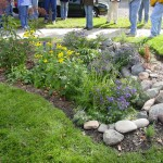 Rain Gardens Offer Option for Problem Areas of Yard