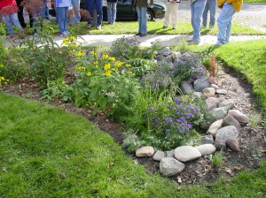 Rain gardens can make a beautiful addition to a home landscape.