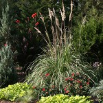 You Don't Have To Pamper Pampas Grass