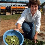 Vegetable Soybean Pods Image Credit Ann Blount, NFREC, UF IFAS Extension