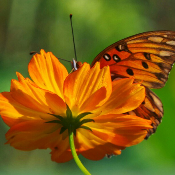 Bring Life to Your Garden with Butterflies!
