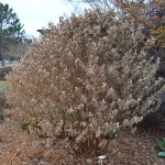 Gardening Patience for Cold-Damaged Plants