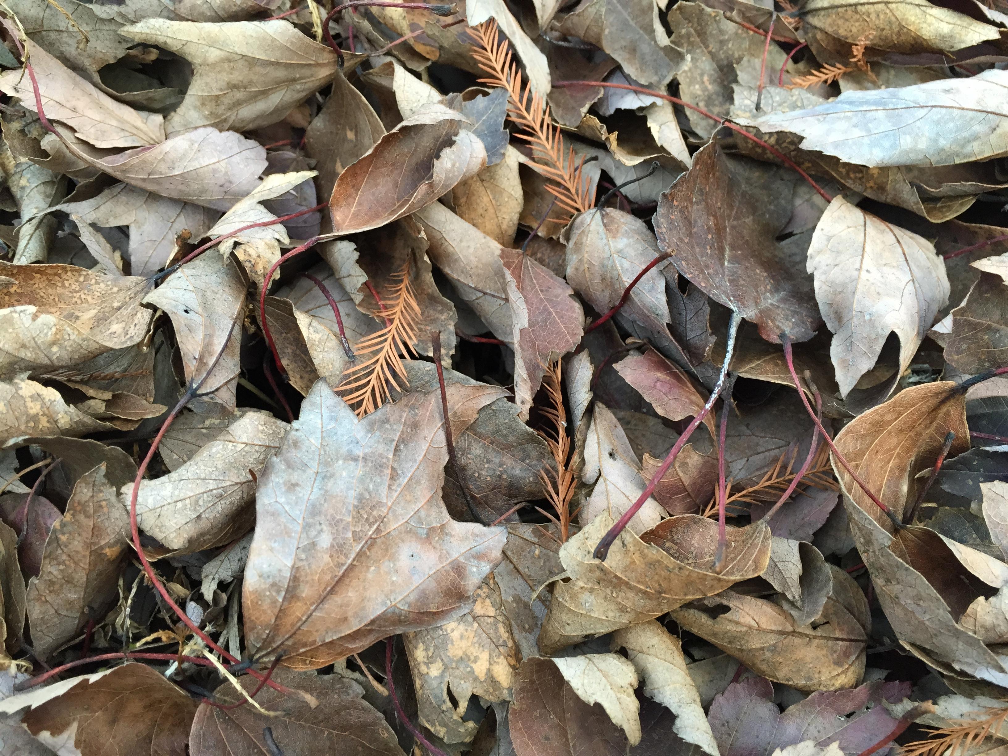 Those Falling Leaves Are Useful