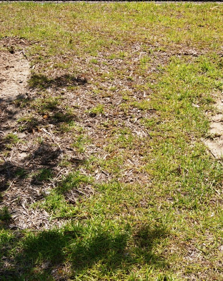 Plan to Reduce Summer Weeds