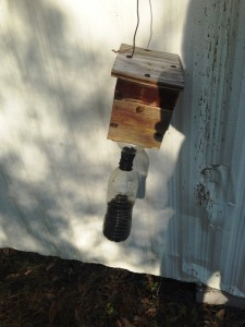 Photo 4 Trap Full of Bees – photo by Shep Eubanks