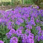 Upcoming Okaloosa County Lawn & Garden Seminars