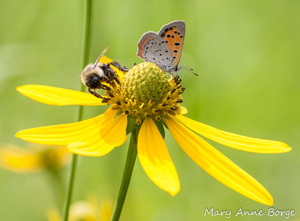 S.H.A.R.E. During National Pollinator Week – June 15-21, 2015
