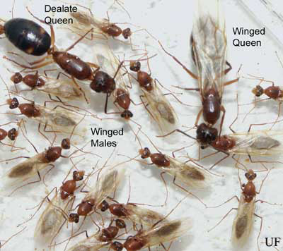 Tips on Controlling Ants