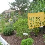 herb garden escambia.ifas.ufl