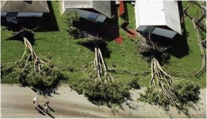 Downed trees in a row along a hurricane-devastated street. Photo Credit: Mary Duryea, University of Florida