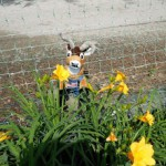Getting to Know Your Backyard Pests