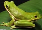 Protecting Precious Species From Pesticides