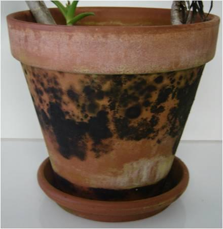 Recycle By Cleaning Your Container Pots