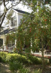 This home uses passive cooling from a front porch and numerous shade trees. Photo credit: Carrie Stevenson
