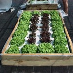 Build Your Own Floating Hydroponic Garden