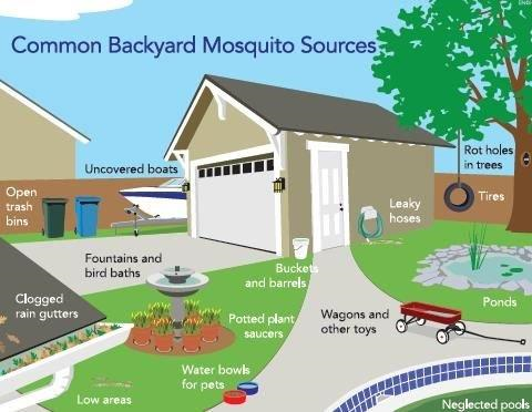 A Natural Disaster Such As Hurricane Michael Can Cause Excess Standing  Water Which Leads Nuisance Mosquito Populations To Greatly Increase.