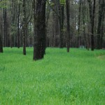 Landscaping for Wildlife with Food Plots