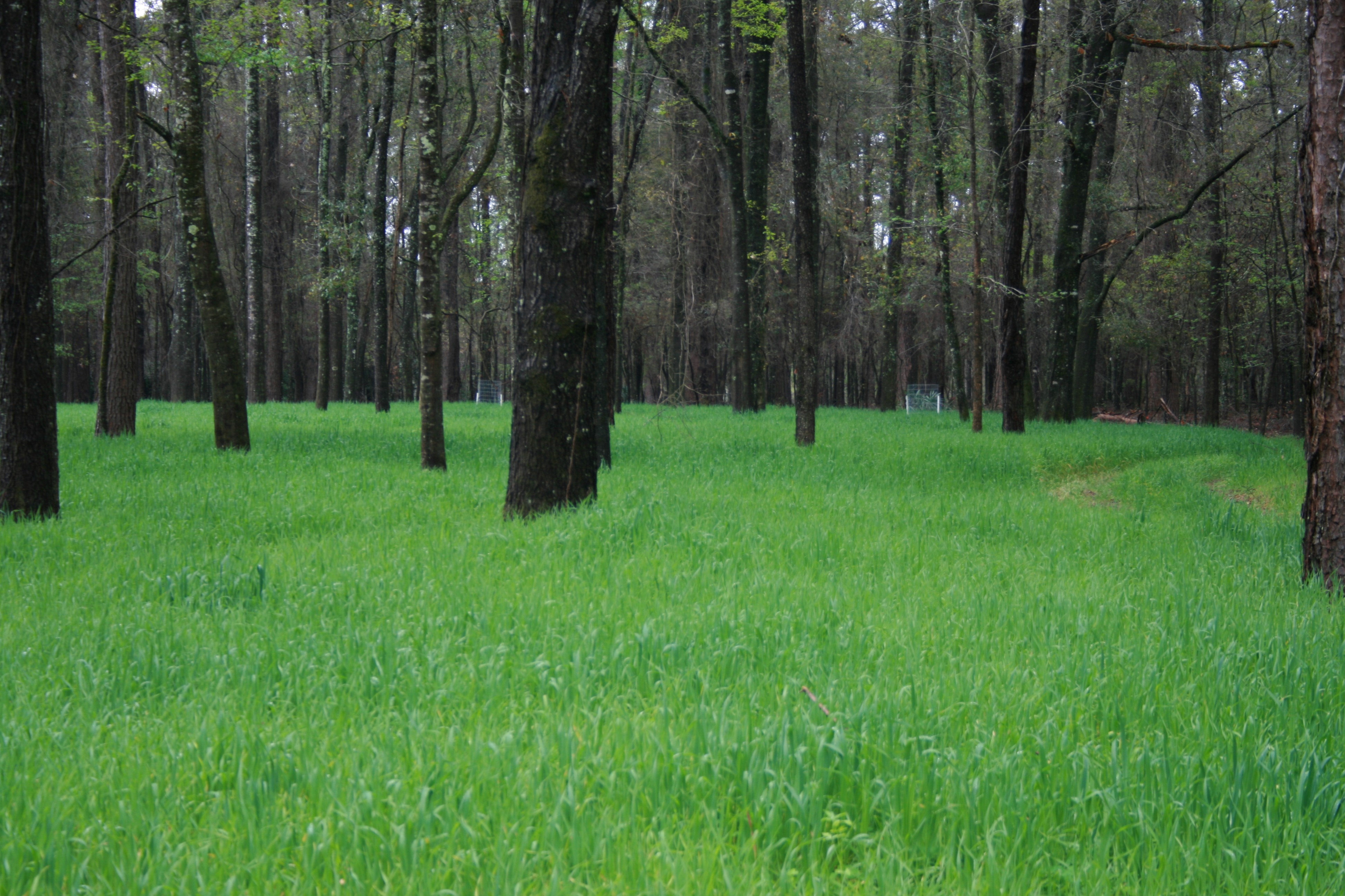 Landscaping for Wildlife with Food Plots | Gardening in ...