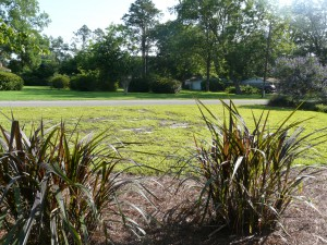 Evaluate problem areas in lawn. Photo Credit: Larry Williams